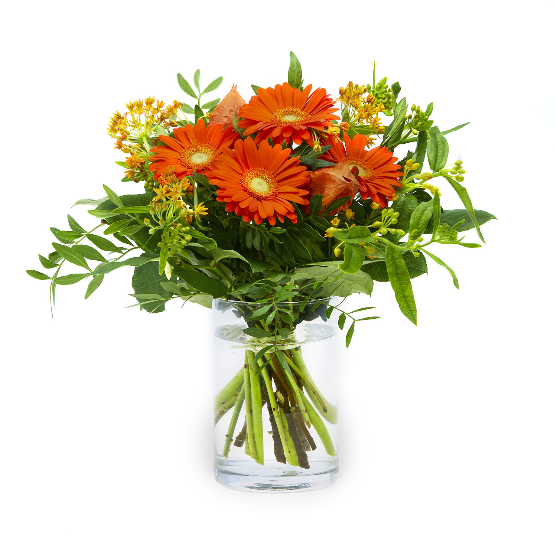 Splending in orange